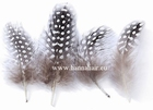 Feather chicken, kleur: naturel