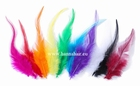 Feather Fazan, Farbe: Rot